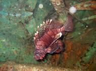 Asisbiz Dive 8 Philippines Mindoro Sabang Elma Jane wreck Oct 2005 07