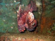 Asisbiz Dive 8 Philippines Mindoro Sabang Elma Jane wreck Oct 2005 08