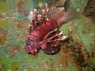 Asisbiz Dive 8 Philippines Mindoro Sabang Elma Jane wreck Oct 2005 10