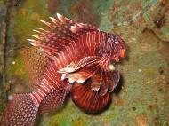 Asisbiz Dive 8 Philippines Mindoro Sabang Elma Jane wreck Oct 2005 11
