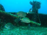 Asisbiz Dive 8 Philippines Mindoro Sabang Elma Jane wreck Oct 2005 13