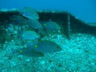 Asisbiz Dive 8 Philippines Mindoro Sabang Elma Jane wreck Oct 2005 14