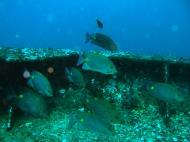 Asisbiz Dive 8 Philippines Mindoro Sabang Elma Jane wreck Oct 2005 15