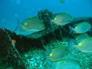 Asisbiz Dive 8 Philippines Mindoro Sabang Elma Jane wreck Oct 2005 16