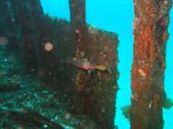 Asisbiz Dive 8 Philippines Mindoro Sabang Elma Jane wreck Oct 2005 18