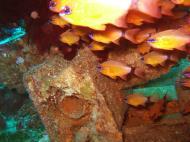 Asisbiz Dive 8 Philippines Mindoro Sabang Elma Jane wreck Oct 2005 20