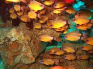 Asisbiz Dive 8 Philippines Mindoro Sabang Elma Jane wreck Oct 2005 21