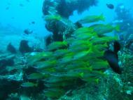 Asisbiz Dive 8 Philippines Mindoro Sabang Elma Jane wreck Oct 2005 22