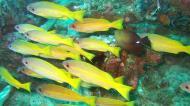 Asisbiz Dive 8 Philippines Mindoro Sabang Elma Jane wreck Oct 2005 28