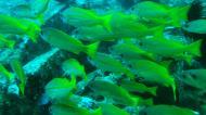 Asisbiz Dive 8 Philippines Mindoro Sabang Elma Jane wreck Oct 2005 29