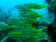 Asisbiz Dive 8 Philippines Mindoro Sabang Elma Jane wreck Oct 2005 31