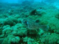 Asisbiz Dive 8 Philippines Mindoro Sabang Elma Jane wreck Oct 2005 33