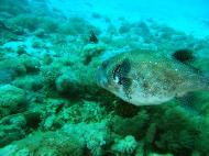 Asisbiz Dive 8 Philippines Mindoro Sabang Elma Jane wreck Oct 2005 34
