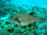 Asisbiz Dive 8 Philippines Mindoro Sabang Elma Jane wreck Oct 2005 35