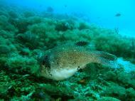 Asisbiz Dive 8 Philippines Mindoro Sabang Elma Jane wreck Oct 2005 36