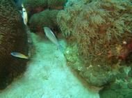 Asisbiz Dive 8 Philippines Mindoro Sabang Elma Jane wreck Oct 2005 38