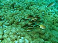 Asisbiz Dive 8 Philippines Mindoro Sabang Elma Jane wreck Oct 2005 39