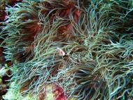 Asisbiz Dive 8 Philippines Mindoro Sabang Elma Jane wreck Oct 2005 40