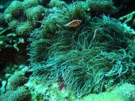 Asisbiz Dive 8 Philippines Mindoro Sabang Elma Jane wreck Oct 2005 41