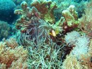 Asisbiz Dive 8 Philippines Mindoro Sabang Elma Jane wreck Oct 2005 42