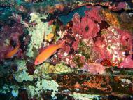 Asisbiz Dive 8 Philippines Mindoro Sabang Junk July 2005 09
