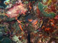 Asisbiz Dive 8 Philippines Mindoro Sabang Junk July 2005 11