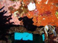 Asisbiz Dive 8 Philippines Mindoro Sabang Junk July 2005 15