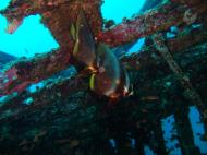 Asisbiz Dive 8 Philippines Mindoro Sabang Junk July 2005 20