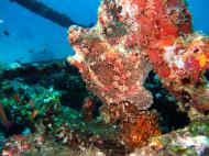 Asisbiz Dive 8 Philippines Mindoro Sabang Junk July 2005 27