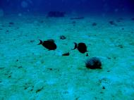 Asisbiz Dive 8 Philippines Mindoro Sabang Junk July 2005 29
