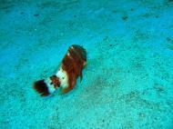 Asisbiz Dive 8 Philippines Mindoro Sabang Junk July 2005 30