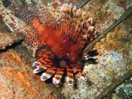 Asisbiz Dive 8 Philippines Mindoro Sabang Junk July 2005 32