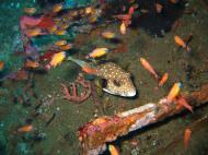 Asisbiz Dive 8 Philippines Mindoro Sabang Junk July 2005 34