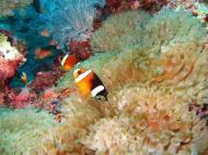 Asisbiz Dive 8 Philippines Mindoro Sabang Junk July 2005 39