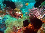 Asisbiz Dive 8 Philippines Mindoro Sabang Junk July 2005 40