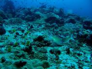 Asisbiz Dive 8 Philippines Mindoro Sabang Junk July 2005 42
