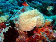 Asisbiz Dive 8 Philippines Mindoro Sabang Junk July 2005 43