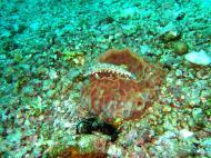 Asisbiz Dive 8 Philippines Mindoro Sabang Junk July 2005 47