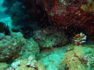 Asisbiz Dive 8 Philippines Mindoro Sabang Junk July 2005 48