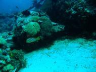 Asisbiz Dive 8 Philippines Mindoro Sabang Junk July 2005 52