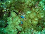 Asisbiz Dive 8 Philippines Mindoro Sabang Junk July 2005 54