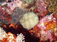 Asisbiz Dive 8 Philippines Mindoro Sabang Junk July 2005 58