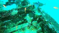 Asisbiz Dive 8 Philippines Mindoro Sabang Junk Nov 2005 13