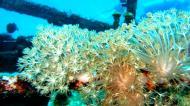 Asisbiz Dive 8 Philippines Mindoro Sabang Junk Nov 2005 14