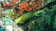 Asisbiz Dive 8 Philippines Mindoro Sabang Junk Nov 2005 18