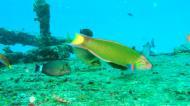 Asisbiz Dive 8 Philippines Mindoro Sabang Junk Nov 2005 19