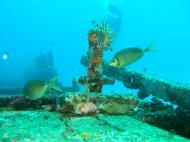 Asisbiz Dive 8 Philippines Mindoro Sabang Junk Nov 2005 21