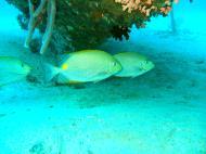 Asisbiz Dive 8 Philippines Mindoro Sabang Junk Nov 2005 26