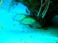 Asisbiz Dive 8 Philippines Mindoro Sabang Junk Nov 2005 27