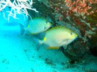 Asisbiz Dive 8 Philippines Mindoro Sabang Junk Nov 2005 28